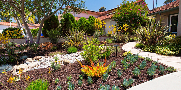 water efficient landscaping in front of a residence