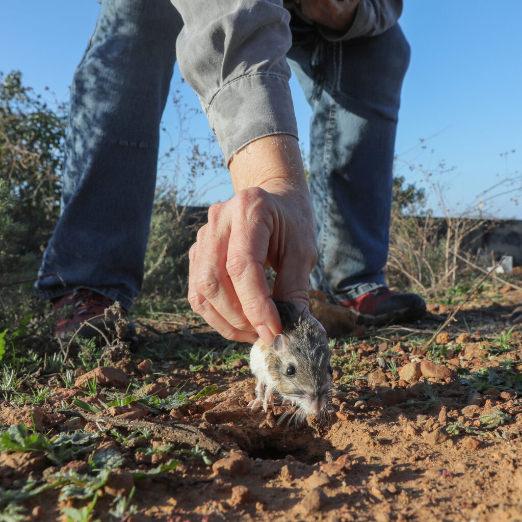 hand holding a fieldmouse in the field