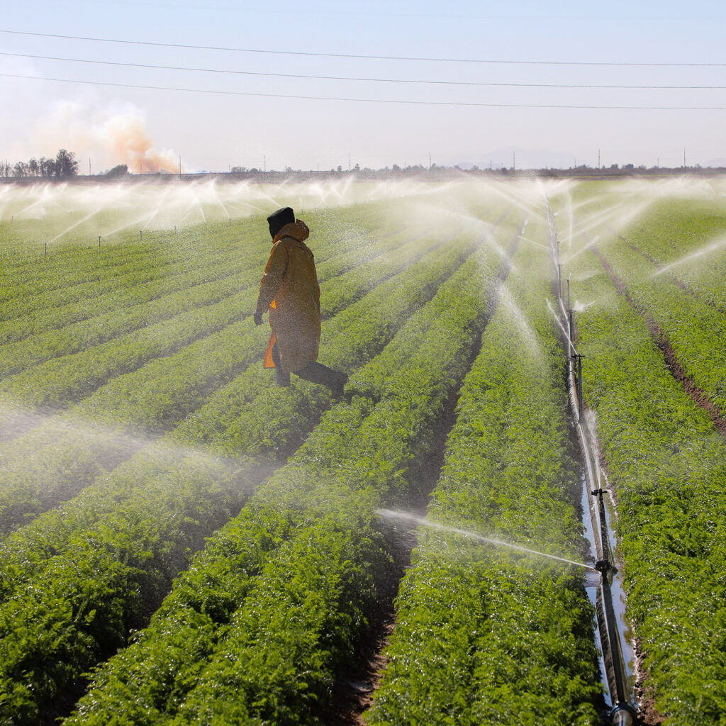 farming irrigation spraying on the fields